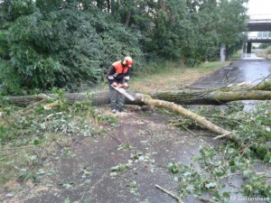 Unwetter – Bäume auf Fahrbahn