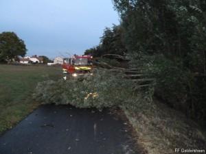 Bäume umgestürzt