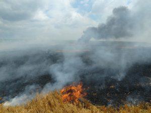 Flächenbrand an der B303